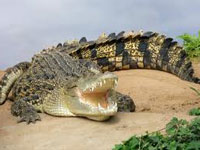 crocodiletripgoa